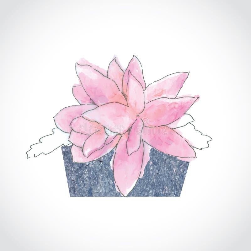 Flor mexicana da aquarela cor-de-rosa no vaso de pedra foto de stock