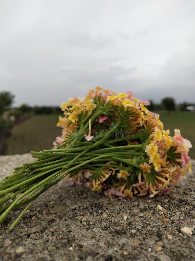 Flor minúscula india rara del pueblo fotos de archivo libres de regalías