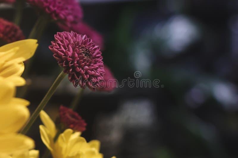 Flor morada cerca fotografía de archivo libre de regalías