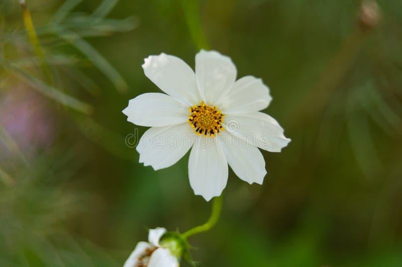Flor muy hermosa imagen de archivo libre de regalías