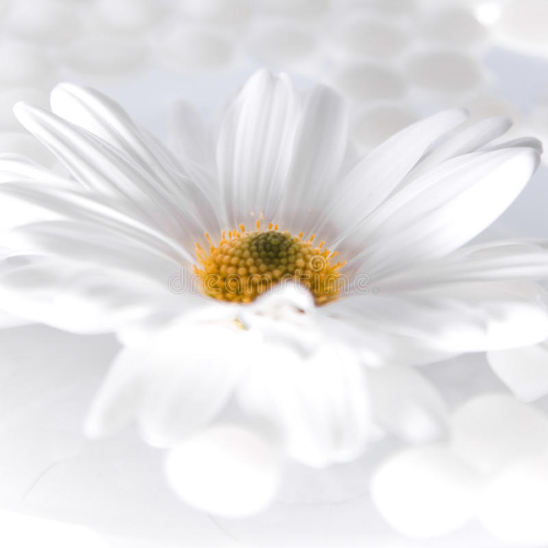 Flor na água foto de stock royalty free