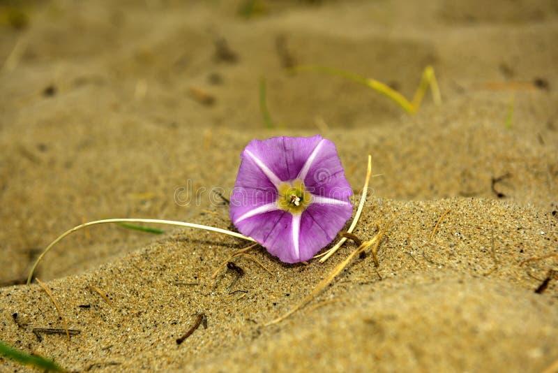 Flor na areia imagens de stock royalty free