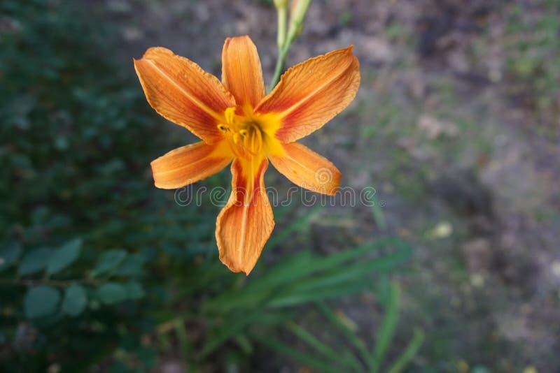 Flor na flor imagem de stock royalty free