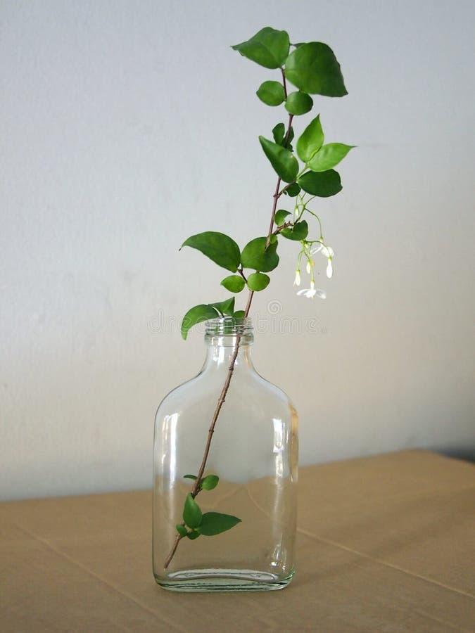 Flor na garrafa de vidro fotografia de stock royalty free