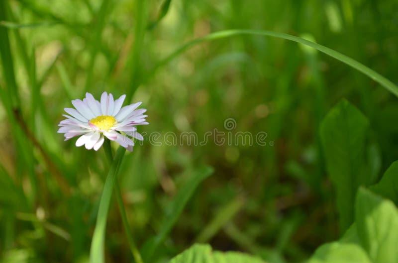 Flor na grama foto de stock