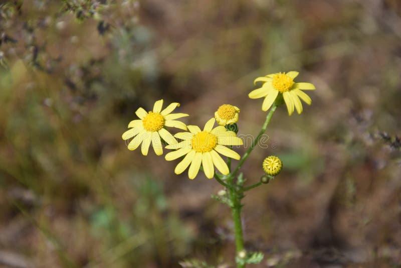 Flor na ilha de Khortytsya fotografia de stock