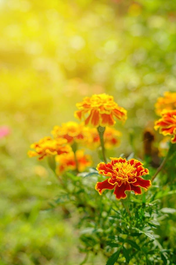 Flor na luz macia e morna foto de stock royalty free