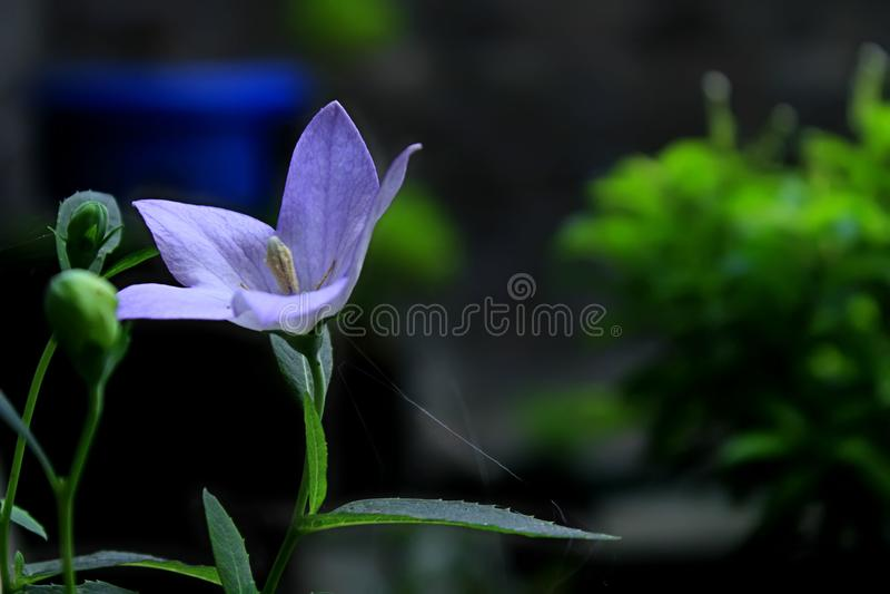Flor na manhã 1 imagens de stock