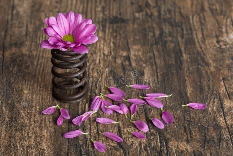 Flor na mola do metal com as pétalas fracas na superfície da madeira do grunge fotografia de stock royalty free