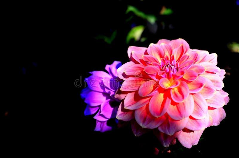 Flor na obscuridade fotos de stock royalty free