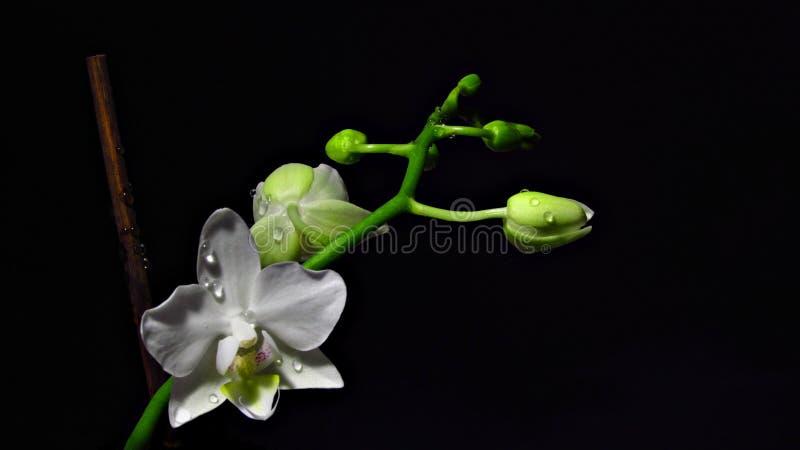 Flor na obscuridade foto de stock