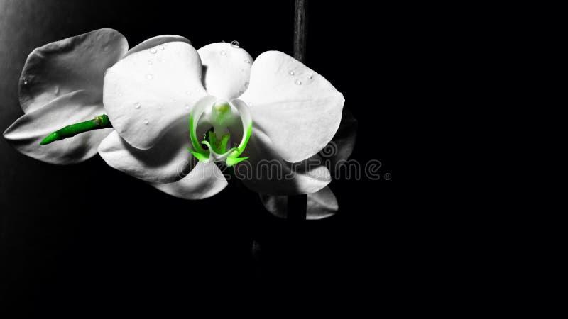 Flor na obscuridade fotografia de stock