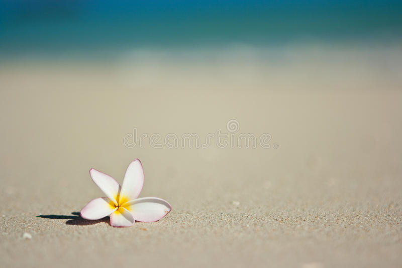 Flor na praia imagens de stock royalty free