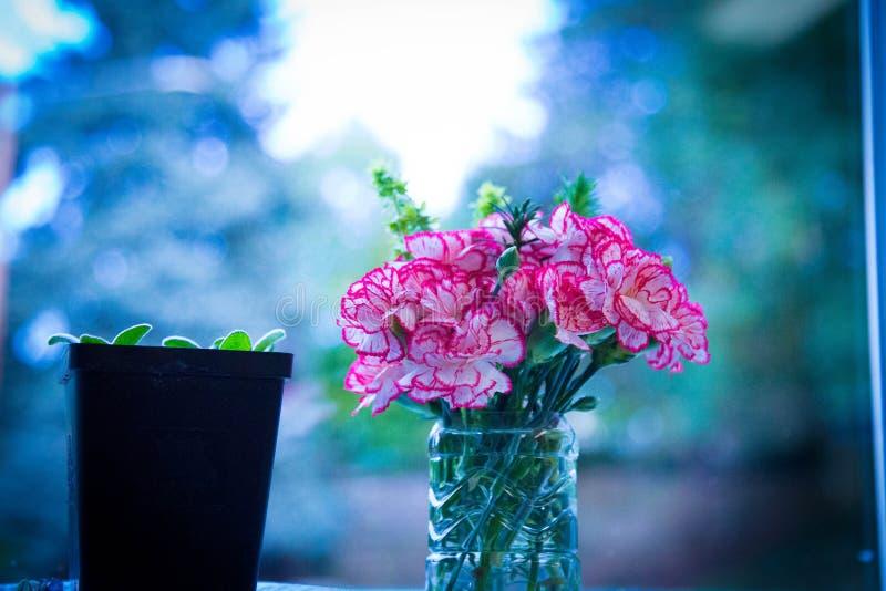Flor na sala fotografia de stock royalty free