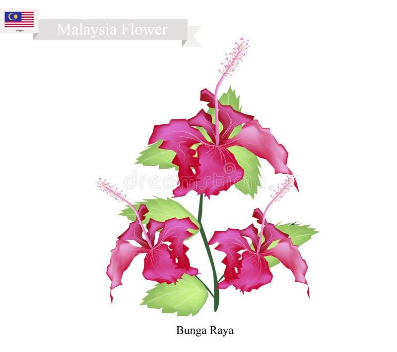 Flor nacional de Malasia, de Bunga Raya o de las flores del hibisco ilustración del vector