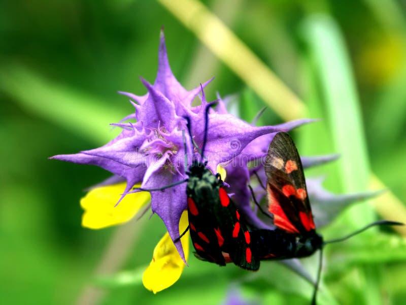 Flor nad um inseto fotografia de stock