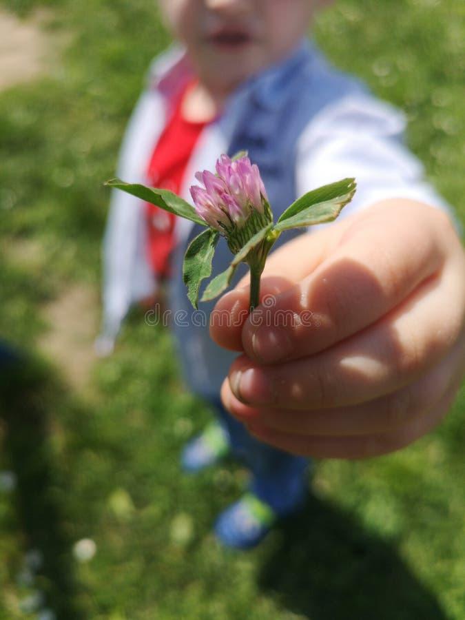 A flor nas m?os fotografia de stock