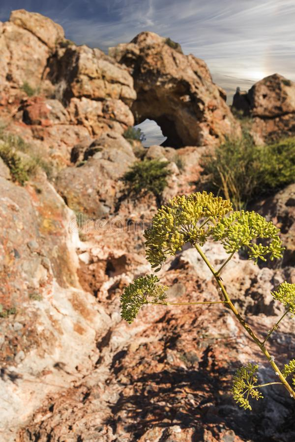 Flor nas rochas imagens de stock royalty free