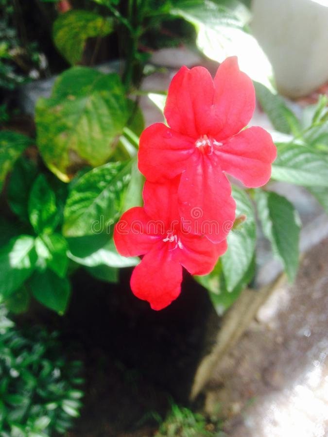 Flor natural fotos de archivo