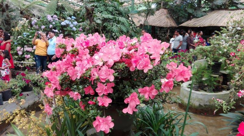 Flor natural da beleza imagens de stock