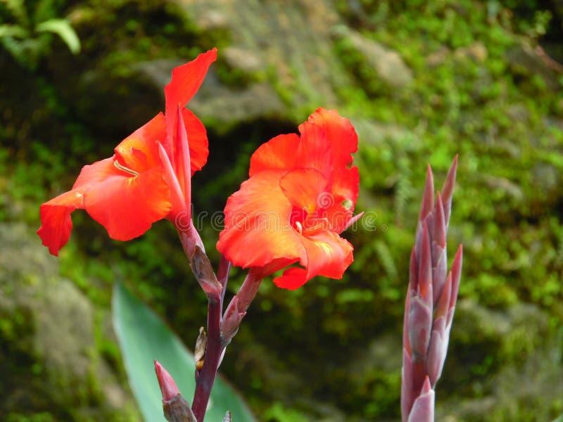 Flor natural en Sri Lanka imagen de archivo