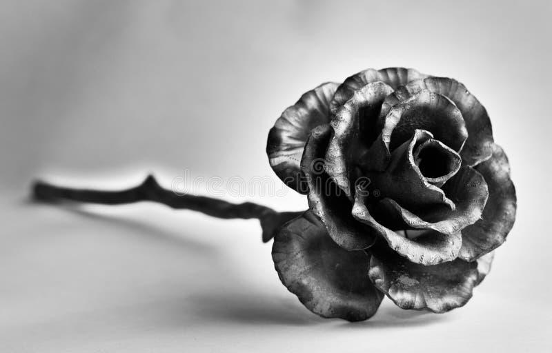 flor negra fotografía de archivo libre de regalías