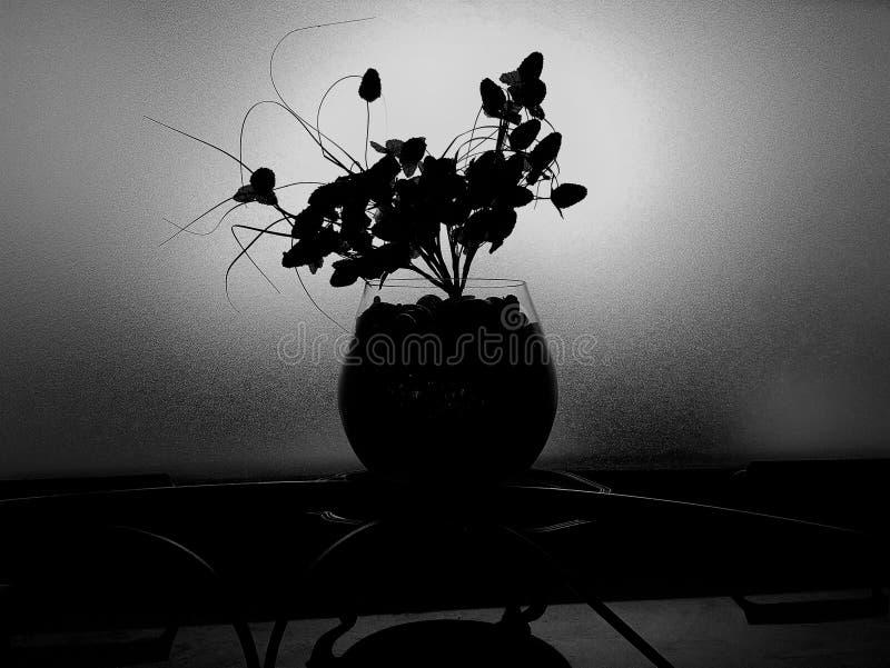 Flor negra fotografía de archivo