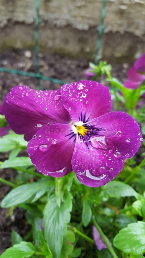 Flor no dia chuvoso imagem de stock royalty free