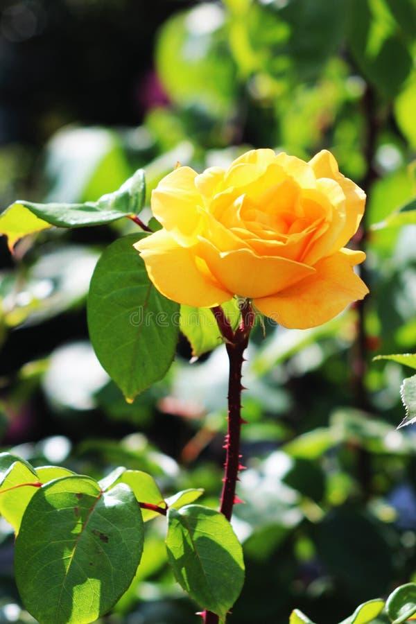 Flor no foco fotografia de stock royalty free