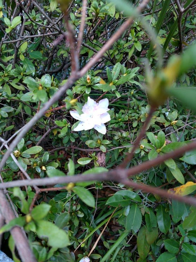 Flor no fundo foto de stock royalty free