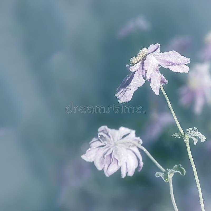 Flor no gelo fotos de stock