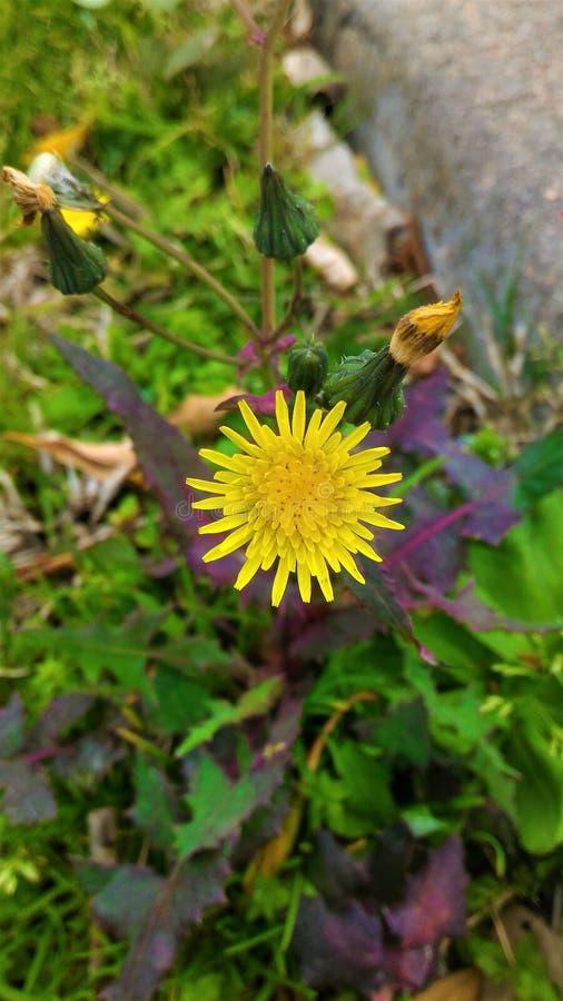 Flor no lado da estrada fotos de stock