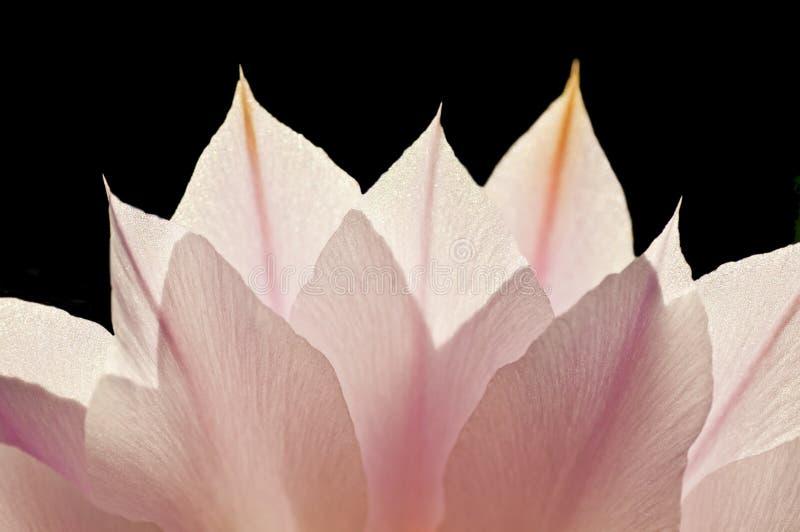 Flor no luminoso foto de stock royalty free