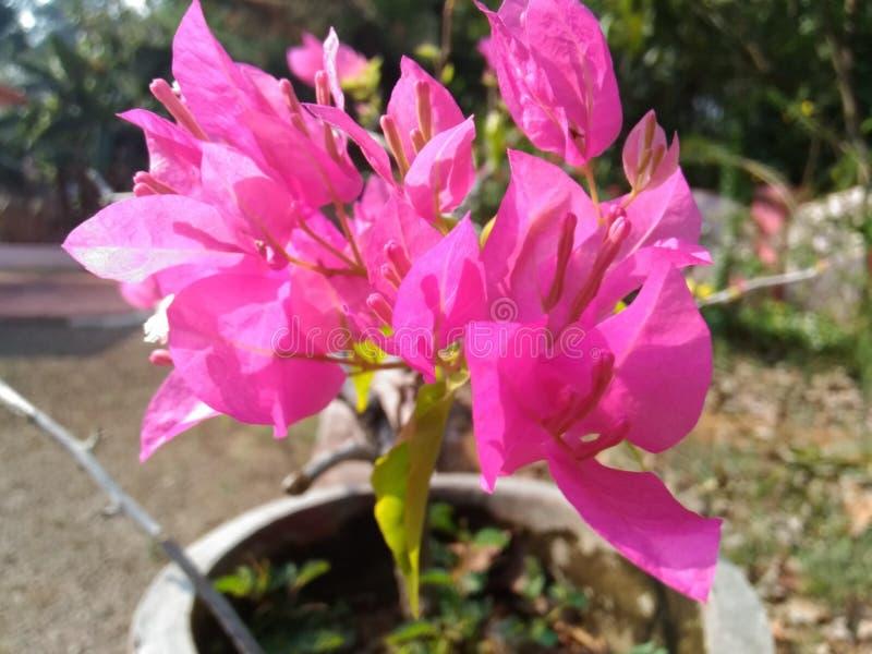 Flor no potenciômetro imagem de stock