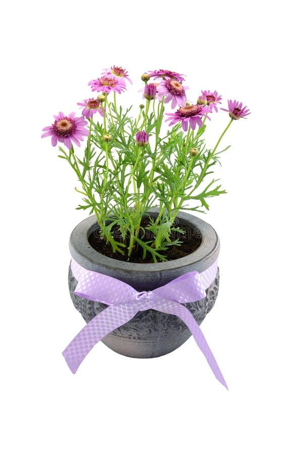 Flor no potenciômetro fotografia de stock
