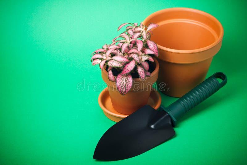Flor no potenciômetro de flor fotos de stock royalty free