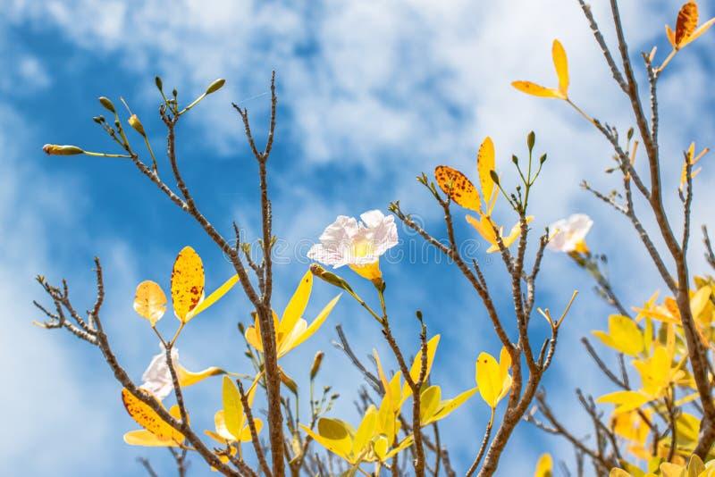 Flor no sol imagens de stock royalty free