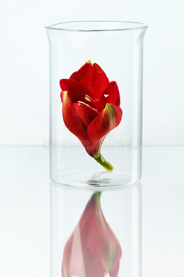 Flor no vidro do laboratório fotos de stock royalty free