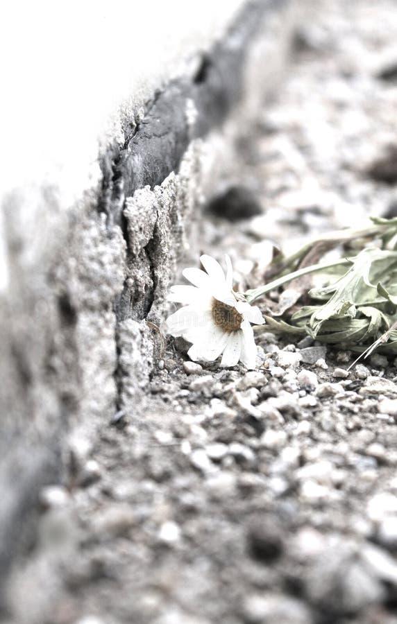 Flor nostálgica imagens de stock