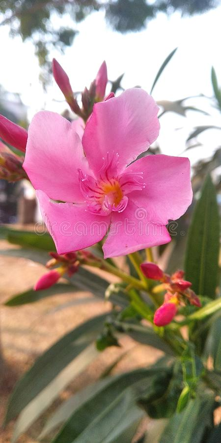 Flor nuevamente nacida fotos de archivo