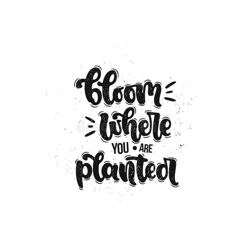 Flor onde você é plantado ilustração royalty free