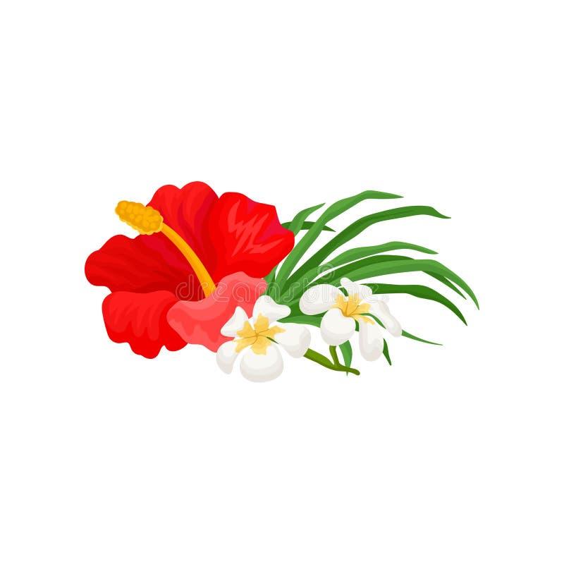 A flor, os hibiscus e o frangipani tropicais bonitos florescem a ilustração do vetor em um fundo branco ilustração do vetor