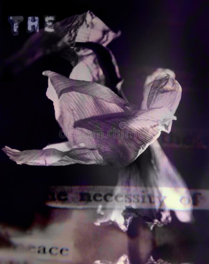 Flor oscura imagen de archivo