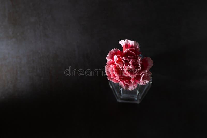 Flor oscura del clavel en fondo oscuro imagen de archivo