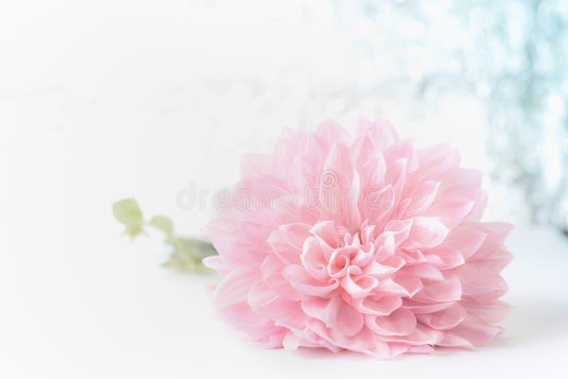 Flor pálida rosada hermosa grande en el fondo del bokeh, vista delantera Tarjeta de felicitación floral creativa para el día de m imagen de archivo