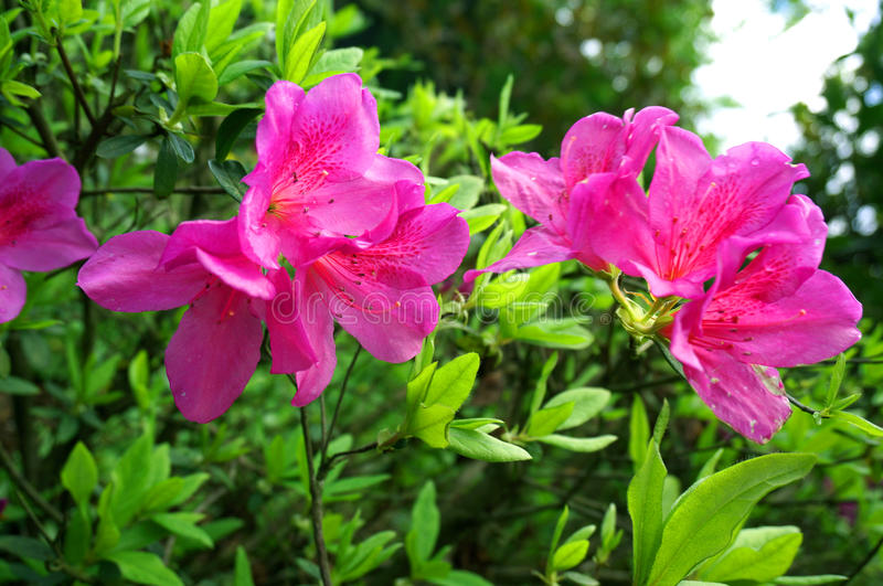Download Flor púrpura imagen de archivo. Imagen de pink, hierba - 42430283