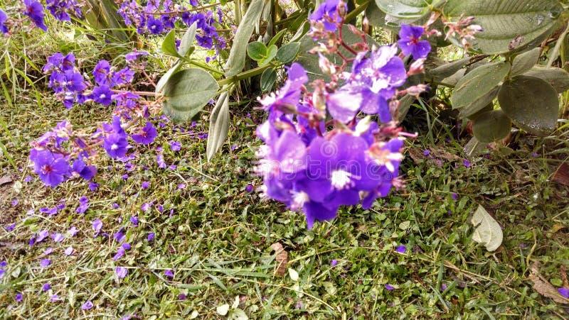 flor púrpura cerca de la tierra fotografía de archivo