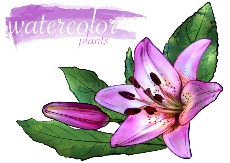 Flor púrpura de la acuarela con las hojas ilustración del vector
