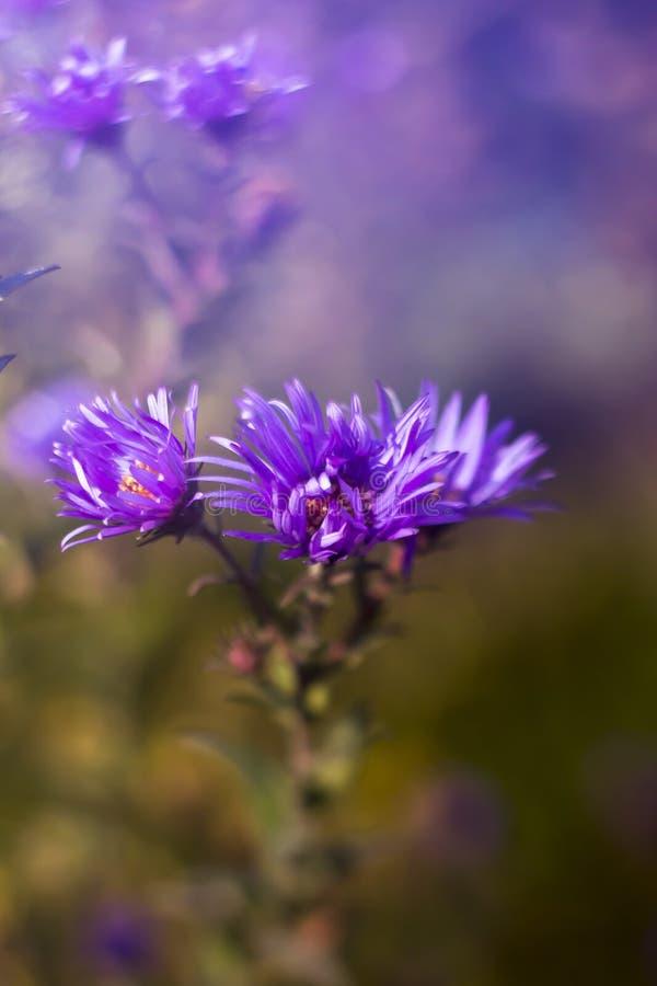 Flor púrpura de Wilde con el bokeh imagenes de archivo