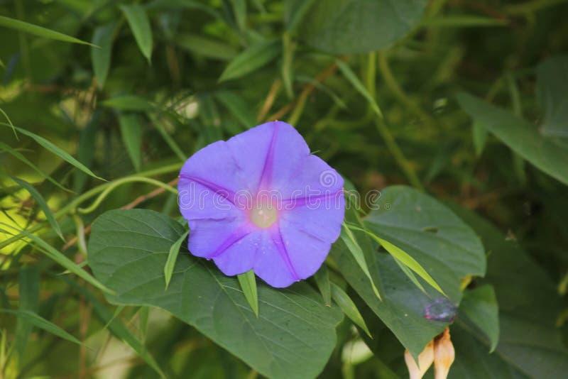 Flor púrpura hermosa imagen de archivo